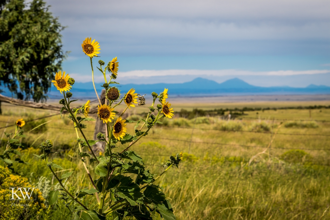 Sunflowers and mountains
